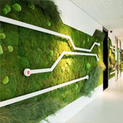 Même les photos de plantes ont un effet apaisant sur les travailleurs