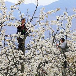 Job atypique : pollinisateur de fleurs