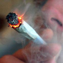 Job atypique : testeur de cannabis