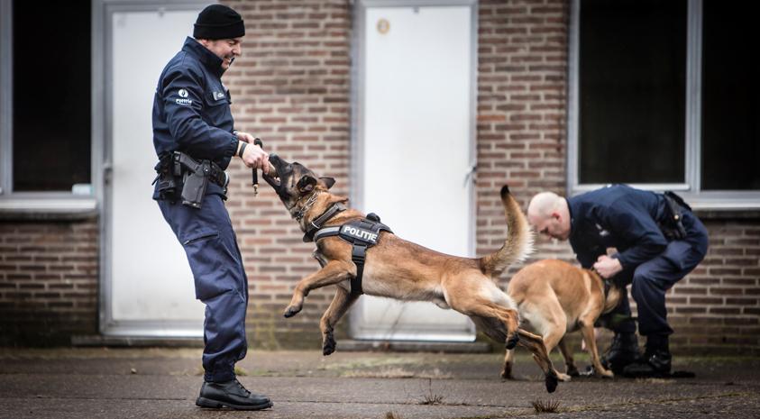 politiehond in actie